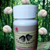 Natural nerve healer and stress reducer mushroom